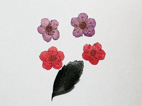 レジンアクセサリーに入れるコデマリと葉の押花